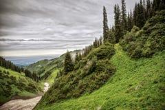 Floresta nas montanhas Imagem de Stock Royalty Free
