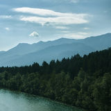 Floresta nas montanhas Imagens de Stock Royalty Free