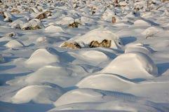 Floresta nas montanhas de Ural fotos de stock