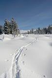 Floresta nas montanhas, esqui-trilha do inverno Fotografia de Stock Royalty Free