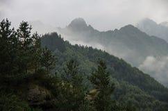 Floresta nas montanhas na névoa e nas nuvens Imagem de Stock