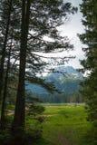 Floresta nas montanhas no parque nacional Durmitor, Montenegro imagem de stock royalty free