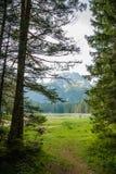 Floresta nas montanhas no parque nacional Durmitor, Montenegro fotografia de stock royalty free