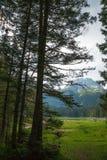 Floresta nas montanhas no parque nacional Durmitor, Montenegro foto de stock royalty free