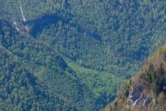 Floresta nas montanhas, a vista da altura Fotos de Stock Royalty Free