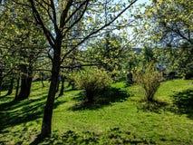 A floresta Neamt fotografia de stock