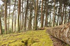 Floresta nebulosa em Colômbia imagem de stock royalty free