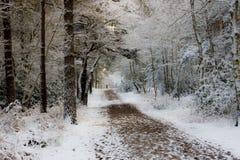 Floresta nevado Imagem de Stock
