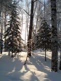 Floresta nevado Imagens de Stock Royalty Free