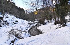 Floresta nevado do abeto na central Grécia de Phthiotis da vila de Pavliani imagem de stock royalty free