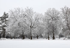 Floresta nevado do inverno Foto de Stock Royalty Free