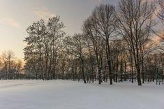 Floresta nevado do inverno, paisagem do inverno Imagem de Stock