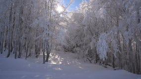 Floresta nevado em um dia ensolarado video estoque