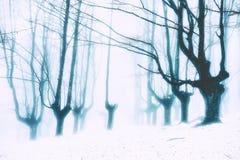 Floresta nevado misteriosa no inverno Foto de Stock Royalty Free