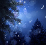 Floresta nevado na noite de Natal Foto de Stock