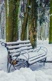 Floresta nevado no inverno Foto de Stock