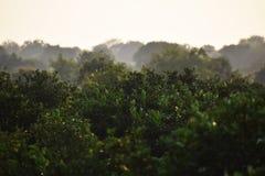 Floresta nevoenta Fotos de Stock Royalty Free