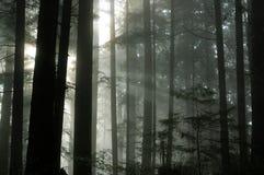 Floresta nevoenta Fotos de Stock