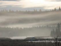 Floresta nevoenta Fotografia de Stock