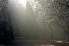 Floresta nevoenta Foto de Stock Royalty Free