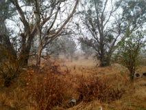 Floresta nevoenta imagem de stock royalty free