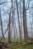 Floresta nevoenta da paisagem imagem de stock royalty free