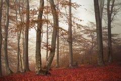 Floresta nevoenta do conto de fadas Imagem de Stock