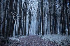 Floresta nevoenta do conto de fadas Imagens de Stock Royalty Free