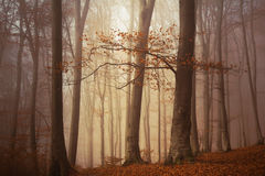 Floresta nevoenta do conto de fadas Imagens de Stock
