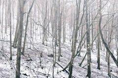Floresta nevoenta do fundo do inverno Fotografia de Stock