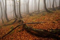 Floresta nevoenta em montanhas gigantes Fotos de Stock