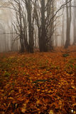 Floresta nevoenta em montanhas gigantes Fotos de Stock Royalty Free
