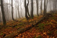 Floresta nevoenta em montanhas gigantes fotografia de stock royalty free