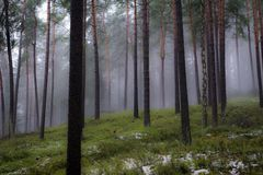 Floresta nevoenta místico com neve foto de stock