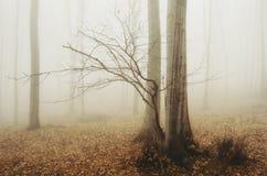 Floresta nevoenta misteriosa no outono Fotos de Stock