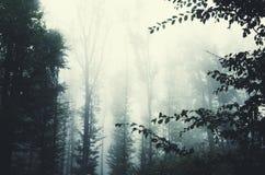 Floresta nevoenta na noite Fotografia de Stock Royalty Free