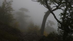 Floresta nevoenta sombrio video estoque