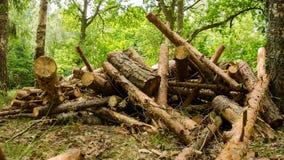 Floresta no ínterim do tempo firewood Lapso de tempo 10 filme