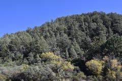 Floresta no Arizona perto de Payson fotos de stock