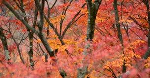 Floresta no autumm Imagem de Stock