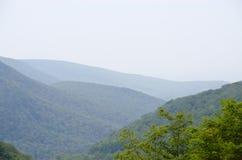 Floresta no bretão do cabo Imagem de Stock Royalty Free