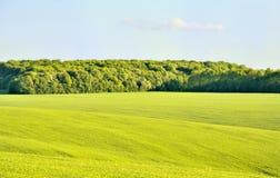 Floresta no campo de trigo Imagens de Stock Royalty Free