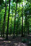 Floresta no console de Kanyavar/Kis Balaton Fotografia de Stock Royalty Free