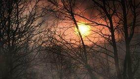 Floresta no crepúsculo com laço sem emenda da névoa vídeos de arquivo