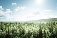 Floresta no dia ensolarado Imagens de Stock