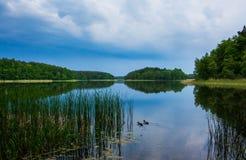 Floresta no espelho Foto de Stock