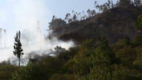 Floresta no fogo video estoque