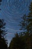 Floresta no fundo estrelado do céu Imagens de Stock