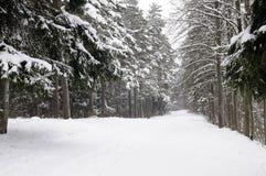 Floresta no inverno Fotografia de Stock