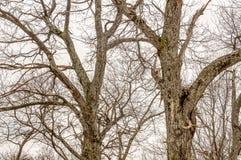 Floresta no inverno Fotos de Stock Royalty Free